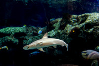 SharkReefAquarium-HylanPhotography-September2015-165310.jpg