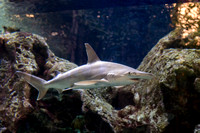 SharkReefAquarium-HylanPhotography-September2015-165422.jpg