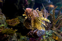SharkReefAquarium-HylanPhotography-September2015-170336.jpg