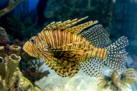 SharkReefAquarium-HylanPhotography-September2015-170400.jpg